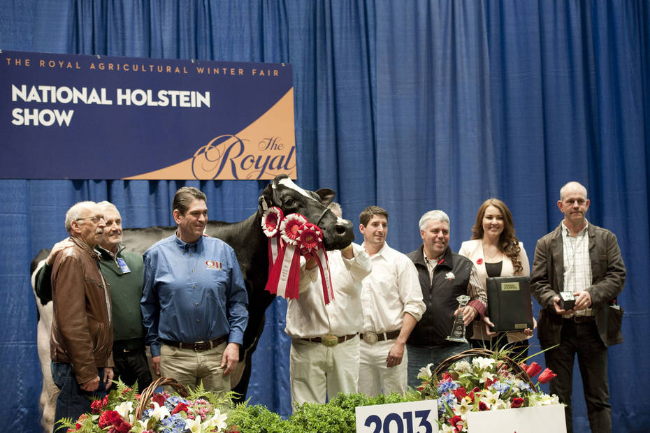 Photos from the Royal | Ponderosa Holstein
